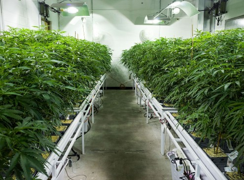 Marijuana Exhibit To Be Held In Oregon? U.S. State Collects Millions In Tax Revenue From Recreational Marijuana[VIDEO]