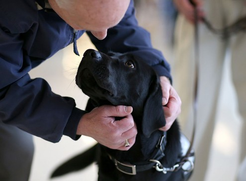 Manage Stress In College By Fostering, Adopting And Hugging Dogs