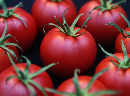 University Of Florida Researchers To Bring Back The Tomato's Flavor