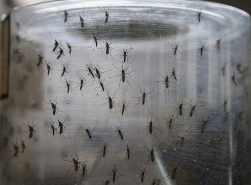 UPenn-Led Team Of Scientists Develops Zika Vaccine