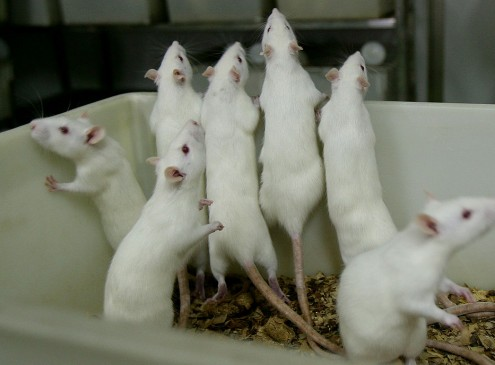 Animal Rights Advocates Urge University Of Montana To Stop Animal Experiments