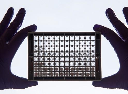 Patent Battle: Harvard, MIT Win Against UC Berkeley For CRISPR Technology