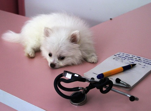 If You Are True Pet Lovers, Schedule Regular Medical Checkups For Your Pets [VIDEO]