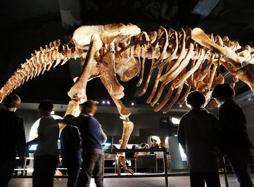 New Study Shakes Up The Roots Of The Dinosaur Family Tree [VIDEO]