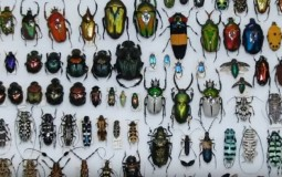 Jewels of the Insect World - Amazing Tropical Beetles