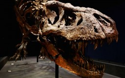 T-Rex named Trix at Naturalis Museum of Leiden