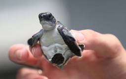 Mind Controlled Turtles Are Now A Reality