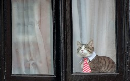 Jasper, the three legged cat in Cambridge