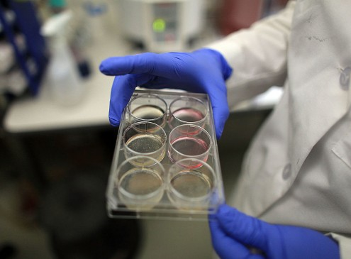 Stem Cells May Become Greatest Drug-Discovery Tool, Harvard Researcher Says [Video]