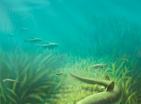 Foraging Strategies in Animals Unchanged For 50 Million Years, Study