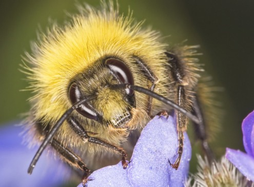 "Researchers Develop ""Bee-Friendly"" Pesticide from Spider Venom and Plant Protein"