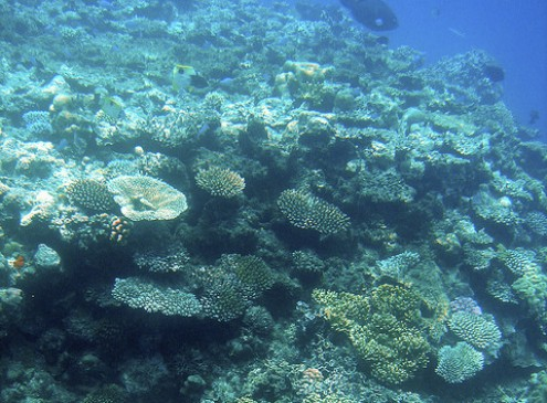 Coral Deaths at the Great Barrier Reef to Increase This Summer, Study
