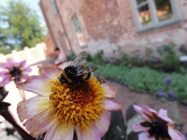 Bees Assess Pollen Quality Based On Petal Color, Study.